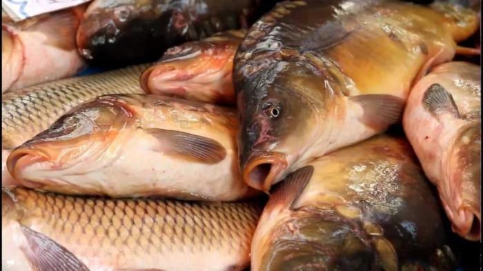 Секреты выбора рыбы в магазине
