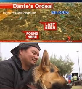 Пёс, который 14 часов охранял двухлетнего малыша, потерявшегося в австралийском лесу.