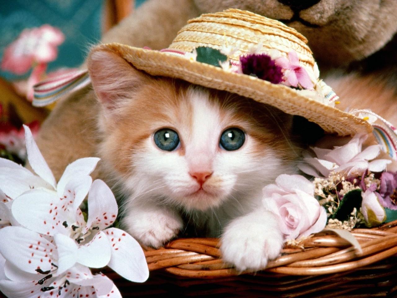 Кошки фото открытки