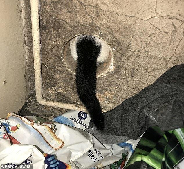 Кошка из Киддерминстера пробралась в вентиляционное отверстие сушилки, которое было всего шесть дюймов в ширину. Работник RSPCA Гленн Бэрд освободил кошку, используя масло животные, застряли, смешно, спасение, чудесные истории