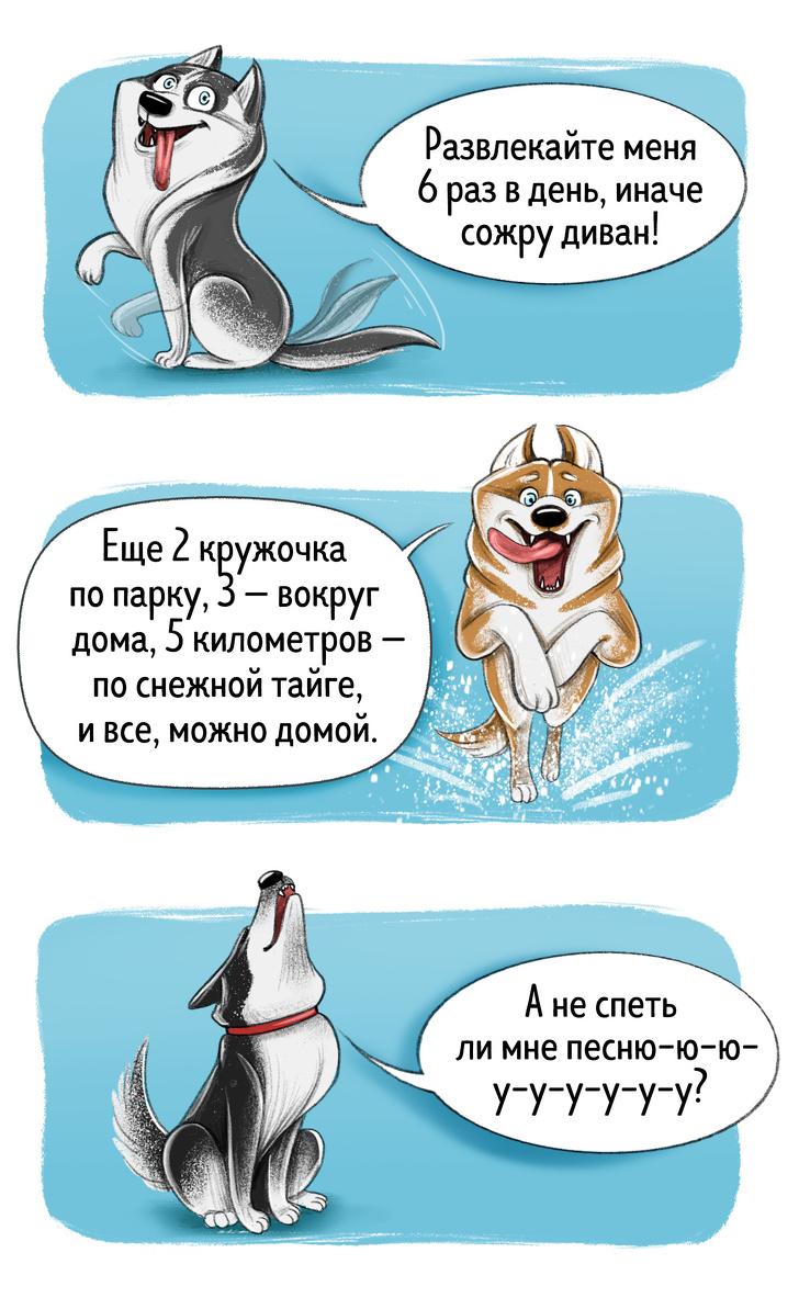 Честный гид по породам собак от первого лица. А у вас сходится?
