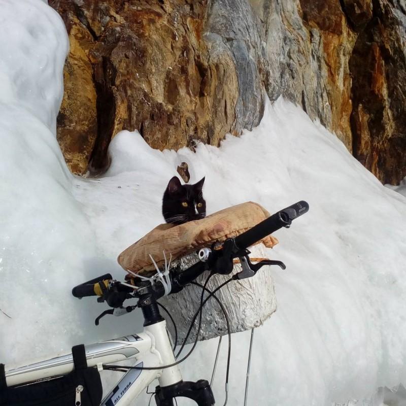 Самый известный кот-путешественник с Урала прибыл на Байкал