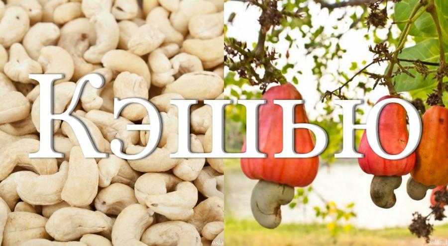 Обработка орехов кэшью и производство фенни