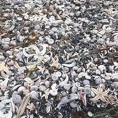 Экологическая катастрофа на Камчатке: реакция звезд камчаткакатастрофа,Новости,ямытихийокеан
