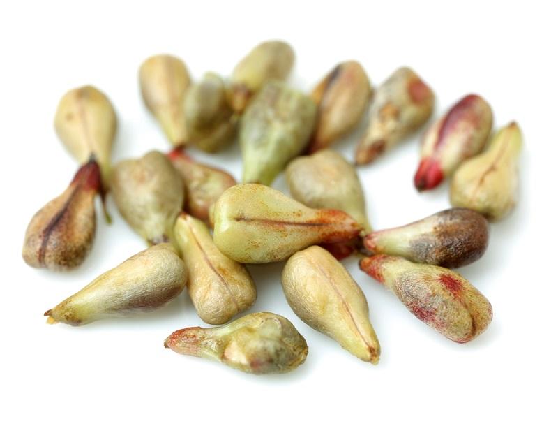 все полезные семена