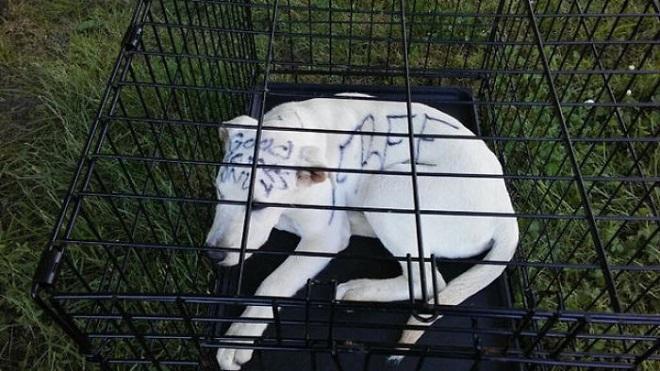 «Разрисованный щенок»: на шерсти живой собаки женщина сделала записи, решив таким образом от нее избавиться