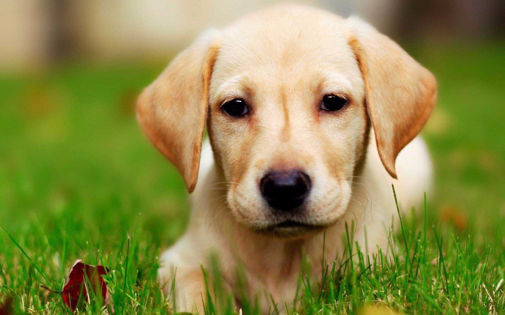 10 самых умных пород собак домашние животные,наши любимцы