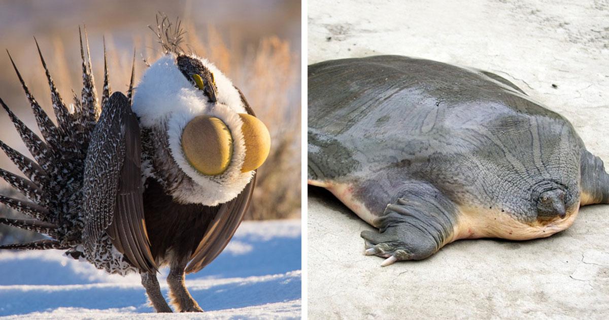 17 зверушек, как непризнанные и непонятные шедевры матушки-природы