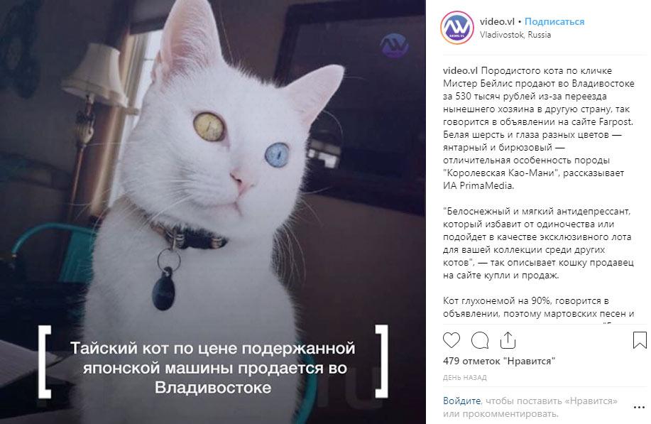 Кота с разноцветными глазами выставили на продажу за полмиллиона рублей