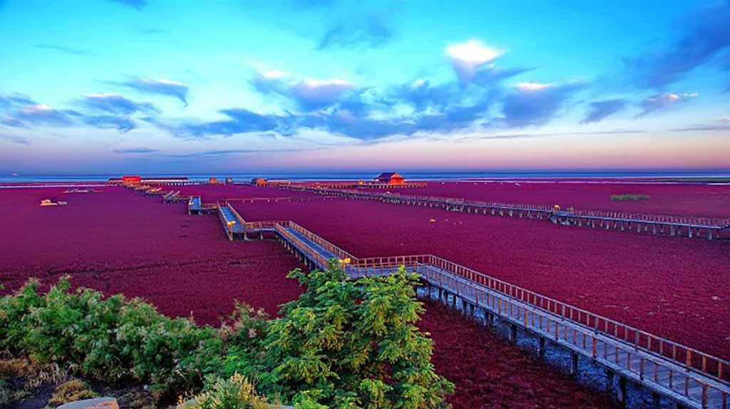 Красный пляж в Паньцзине интересное