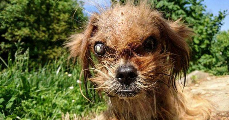 Просто невероятно, как преобразился бездомный пес всего за 8 месяцев!