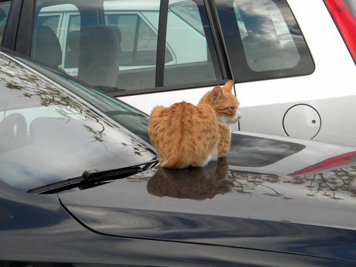 Кот устроил внеплановый ремонт машины! юмор.