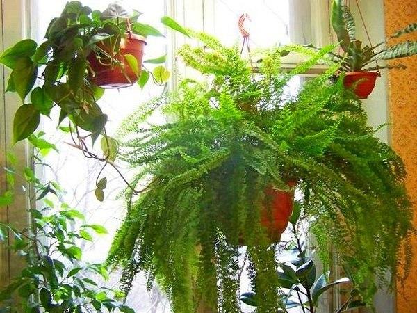 Комнатные растения в подвесных кашпо.