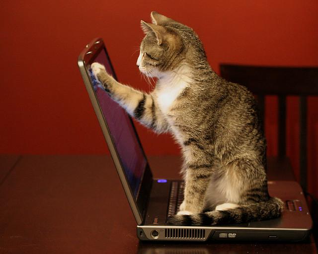 У моего кота интернет-зависимость