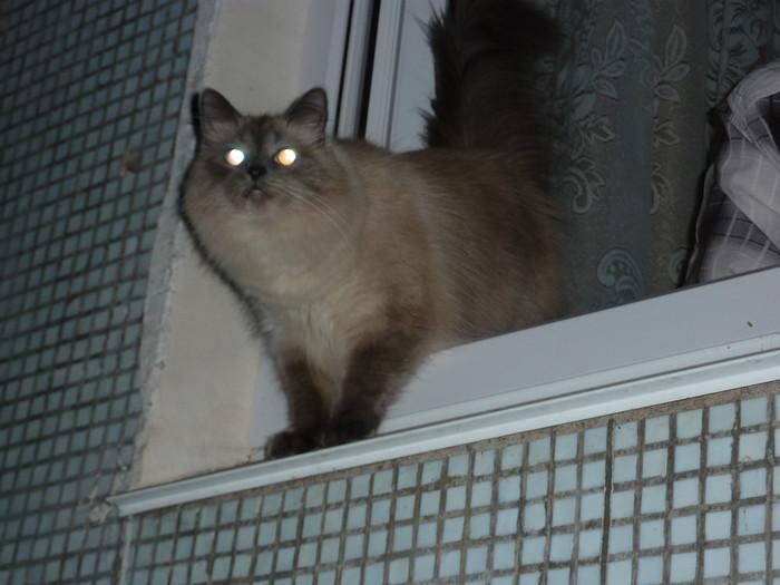 А кошку я вам не отдам! истории из жизни