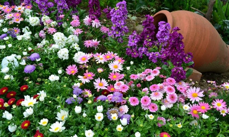 Хотите красивые цветы – не забывайте про удобрения!