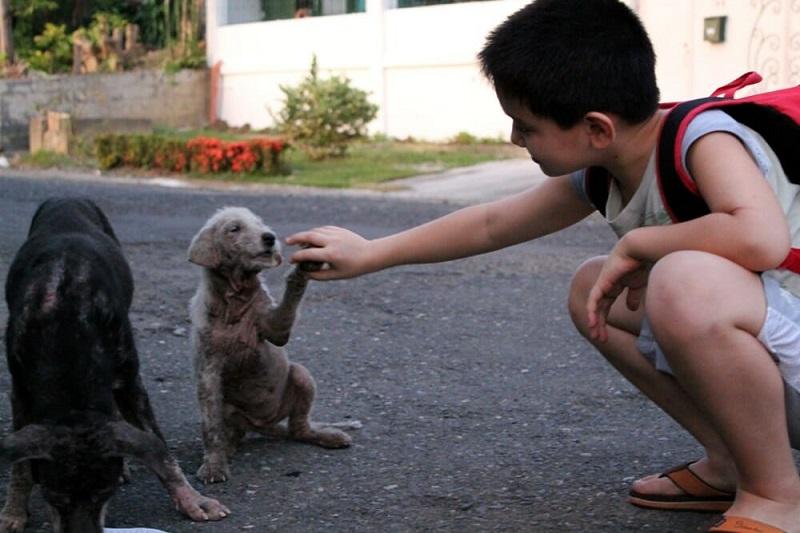 Этот мальчик каждый день уходил из дома с утра пораньше. Отец решает проследить за ним, и узнает душераздирающую правду