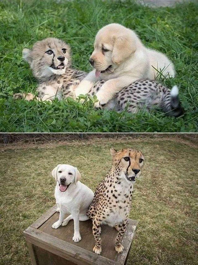 8. Дружба через года животные, кошка, милота, прикол, собака, фото