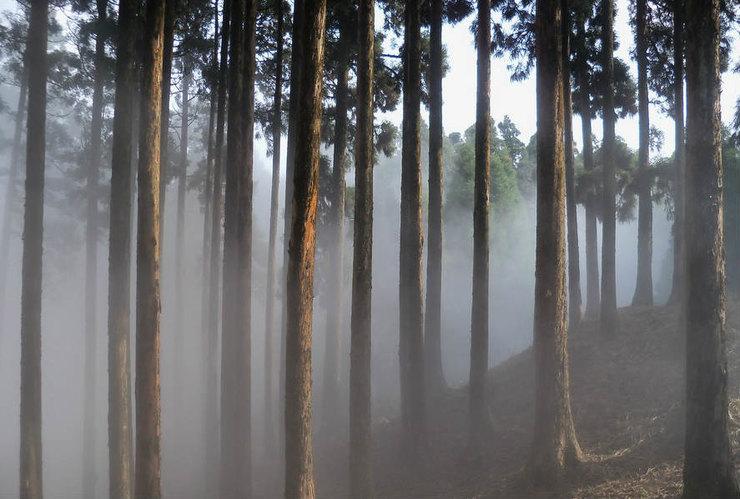 Самые мистические леса, в которых обитают привидения