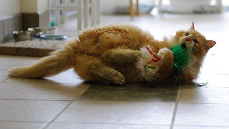 Кот был очень дружелюбным и игривым в мире, домашний питомец, животные, история, кот, семья