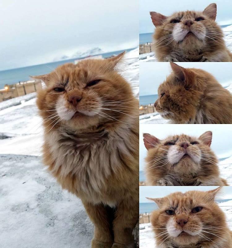 Кеша - единственный кот на норвежском архипелаге Шпицберген баренцбур,домашние животные,жизнь,интересное,север,шпицберген