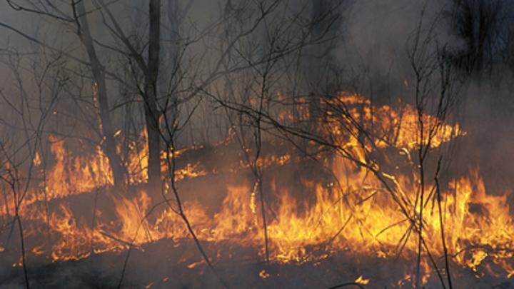 Умышленный поджог или халатная «оптимизация»? Политики, эксперты и Рунет спорят, по чьей вине Сибирь в огне