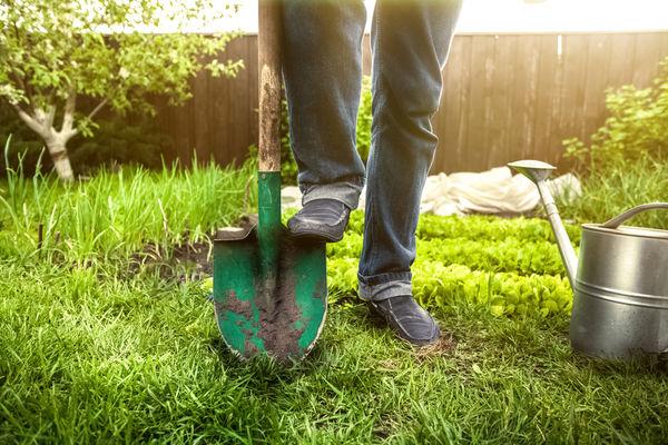Огород без хлопот, не копать, не полоть, и не поливать