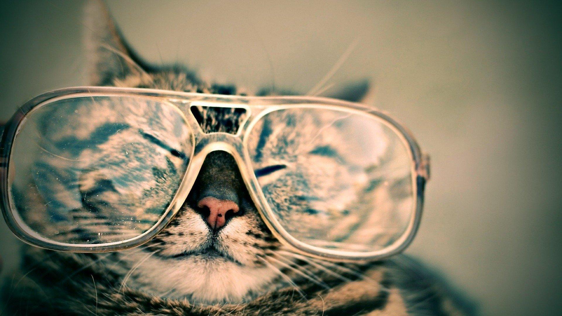 Кошки — путешественники животные,зверюшки,котики,курьезы,питомцы,приколы,юмор