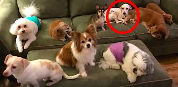 Щенок не мог нормально спать после пережитого на собачьей ферме история спасения, помощь животным, собака, собаки, спасение животных, трогательно