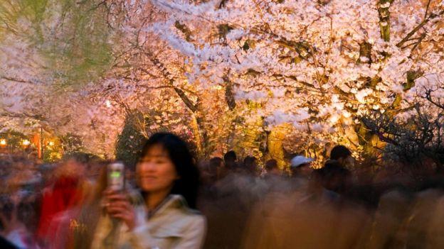 Ваби-саби - это, например, осознание мимолетного великолепия цветущей сакуры