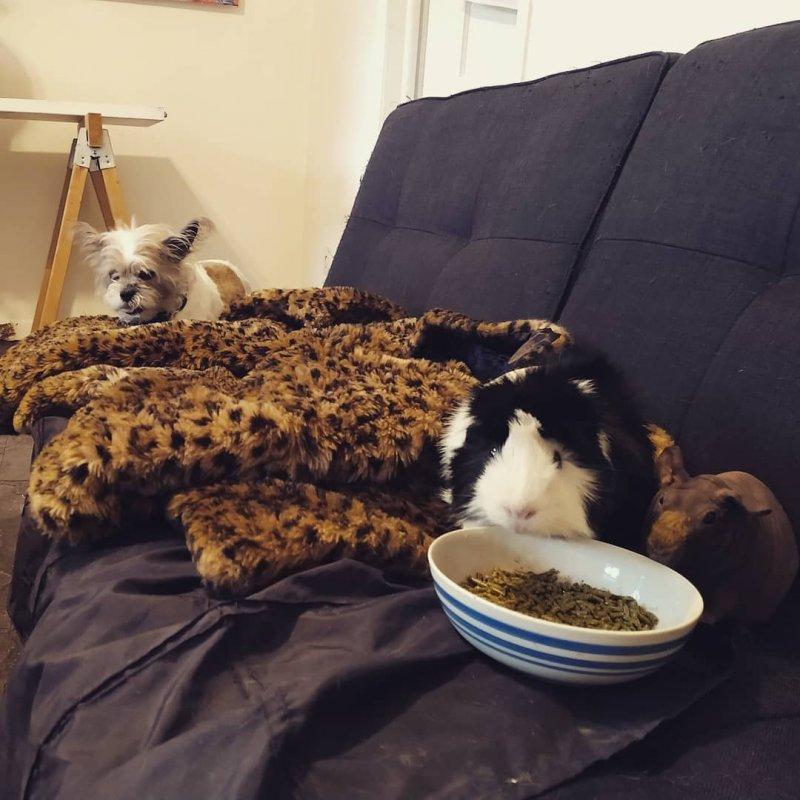 11. Почему ЭТО ест из моей тарелки? животные, кошка, милота, прикол, собака, фото