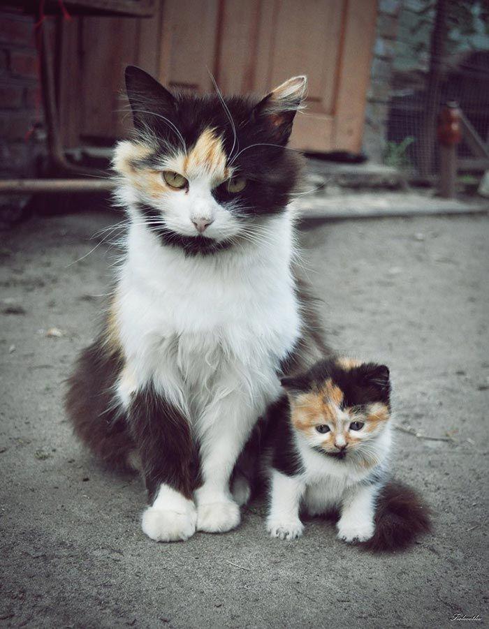 20 взрослых кошек со своими очаровательными мини-копиями