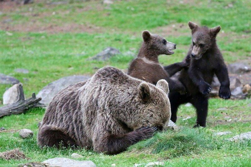 20 животных, взглянув на которых, вы непременно улыбнетесь месте, когда, медведь, Потому, обыкновенно, милыВстал, загородилИсточникavatarsmdsyandexnetА, знаете, гималайский, Подборка, ночных, величине, почти, вдвое, меньше, бурого, Отличается, более, стройным, популярно