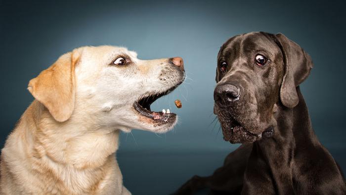 Как выглядят собаки, которые…