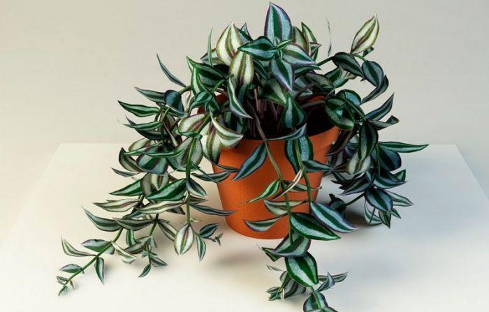Лечебные комнатные растения здоровье,комнатные растения,народная медицина