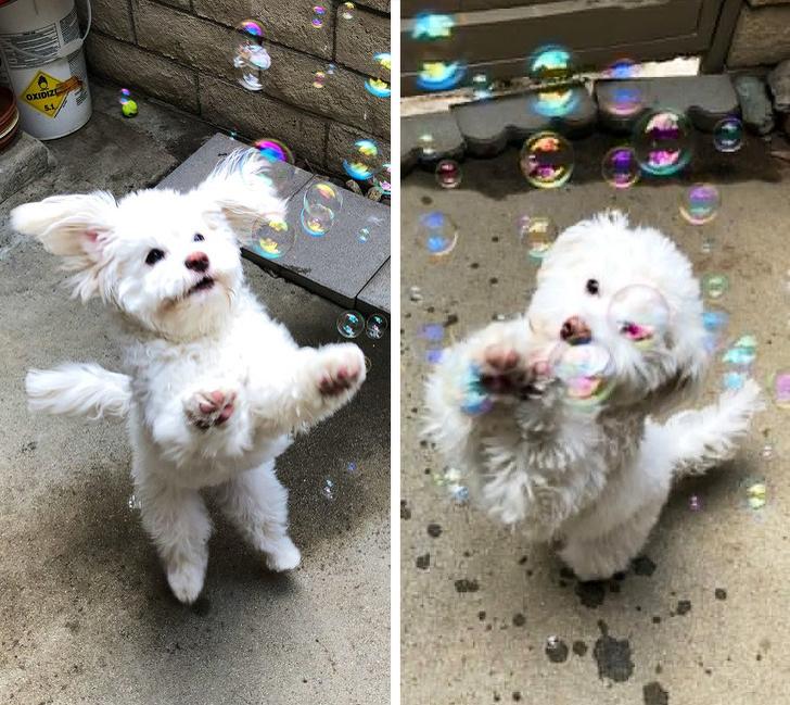 17 доказательств того, что счастье можно измерять в собаках