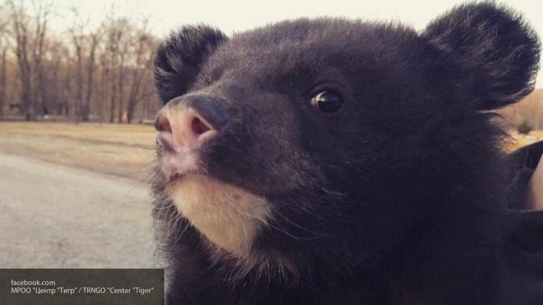 охоты пернатую фото медведя с бидоном на голове квартиру подай