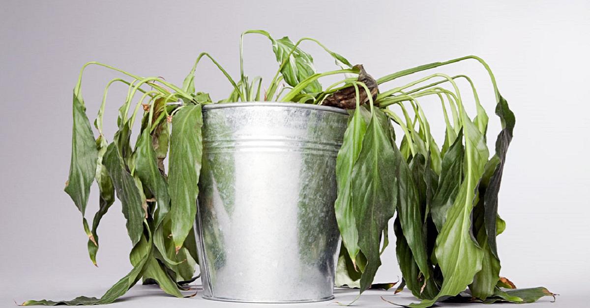 2 простых трюка для здоровья комнатных растений. Они оживут и зацветут!