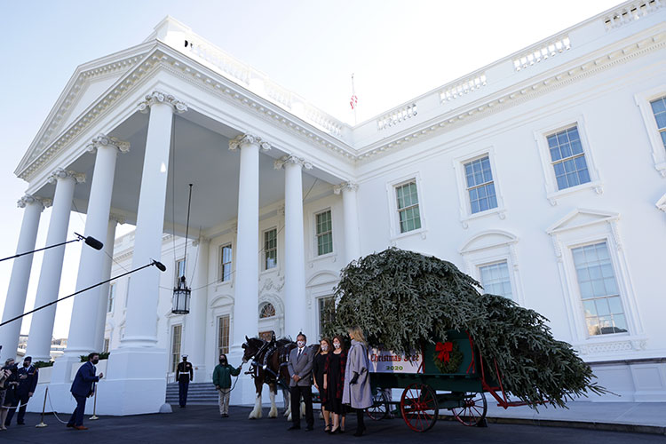 Напоследок: Мелания Трамп на церемонии установки рождественской ели в Белом доме Звезды,Новости о звездах