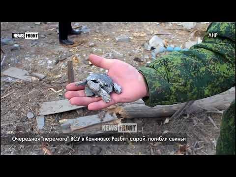 Очередная «перемога» ВСУ в Калиново: Разбит сарай, погибли свиньи