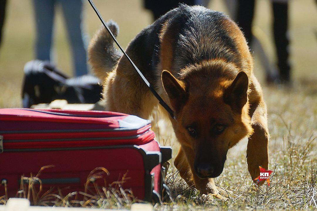 Уральские кинологи рассказали, как бороться с плохим настроением собак
