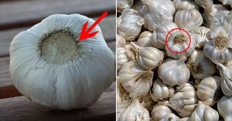 -Засланный казачок-: как отличить российский чеснок от китайского и чем опасен импортный овощ
