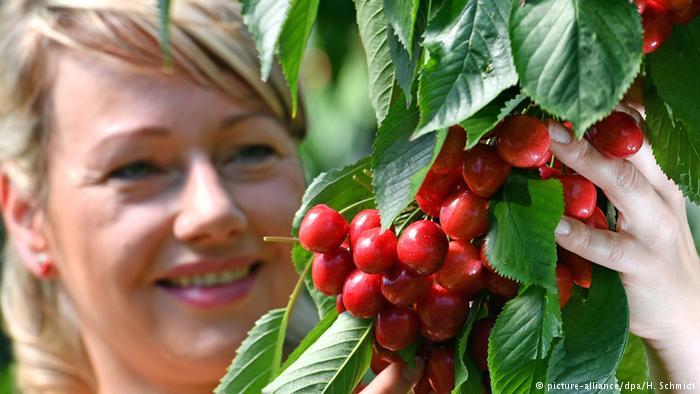 Вишня и черешня - секреты богатого урожая. Блестящие идеи по обустройству крыльца