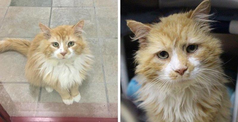 Кот прошел 12 миль, чтобы вернуться в семью, а его решили усыпить в мире, домашний питомец, животные, история, кот, семья