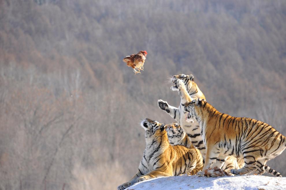 Порция интересных  фото о жизни животных