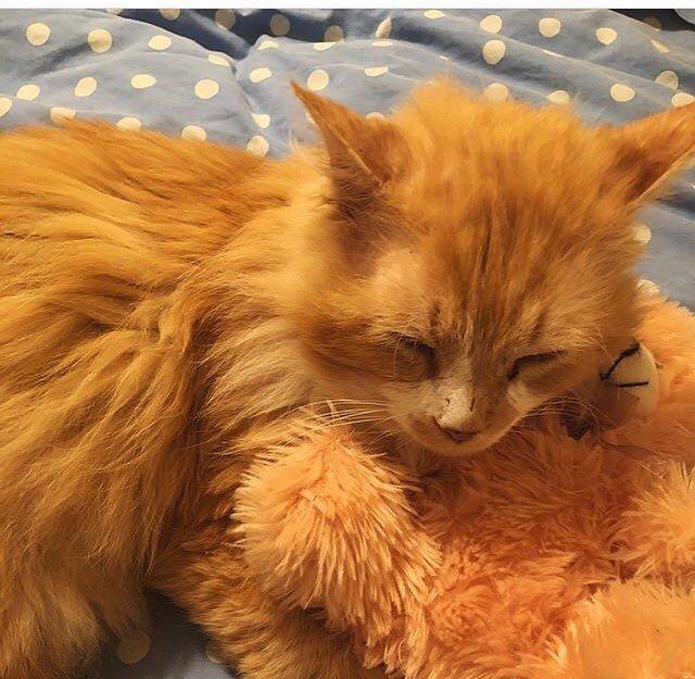 Мишель признаётся, что он очень милый и любвеобильный в мире, домашний питомец, животные, история, кот, семья