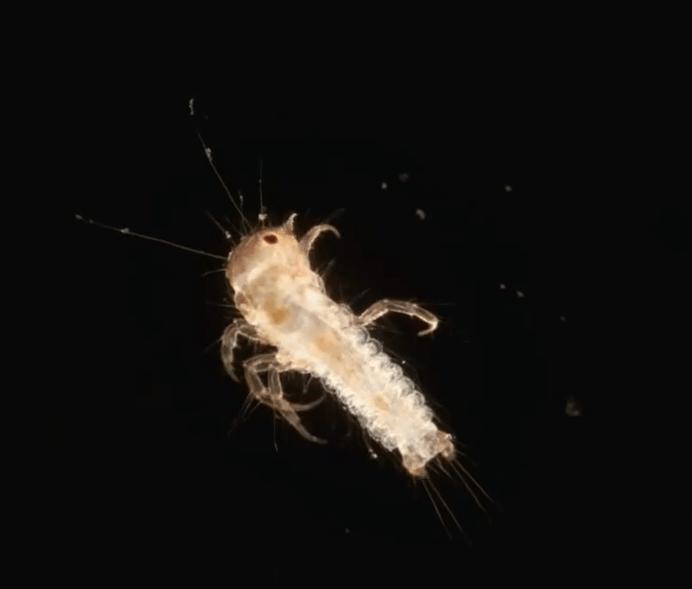 Некоторые страшилки хоть и выглядят пугающе, но оказываются весьма полезными в мире, интересно, под микроскопом, познавательно, фото