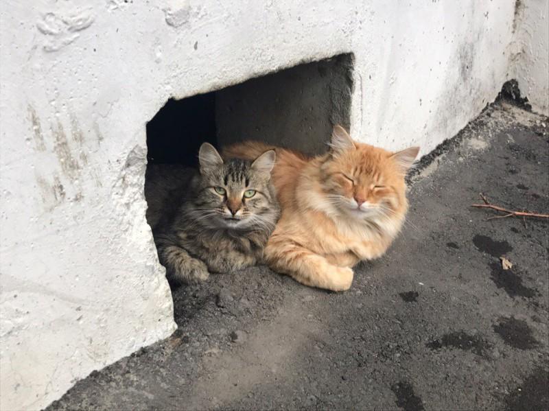 Все для котиков: Минстрой РФ запретил замуровывать подвалы