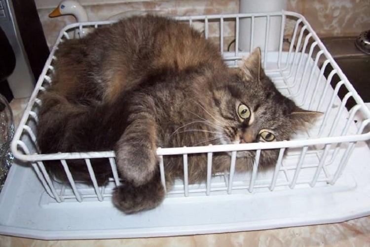 Заведите кошку, и ваша жизнь больше никогда не будет прежней!