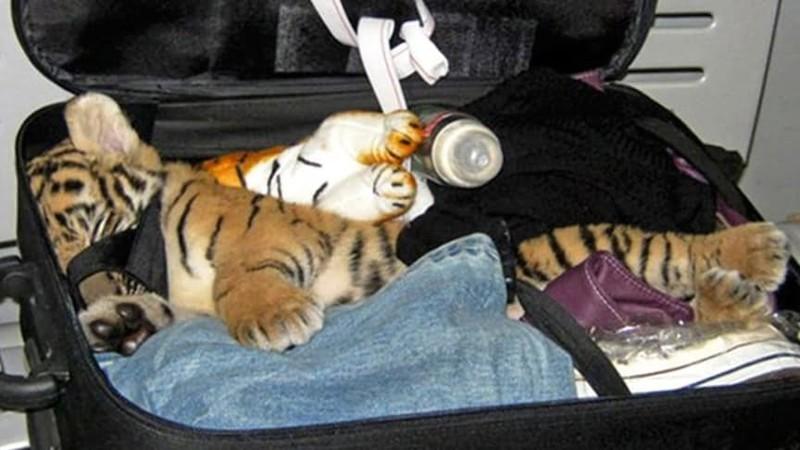 Тигренок аэропорт, багаж, контрабанда, служба безопасности, странные находки